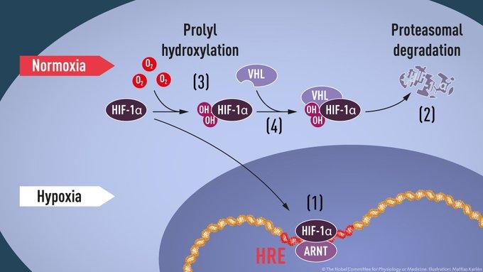 biotech info articles egrcsp xoaaybqe
