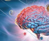 biotech info articles edito cerveau et immunite un monde nouveau souvre pour la recherche