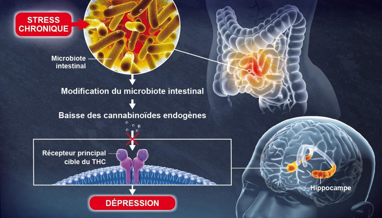 biotech info articles illustration cp lledo fr