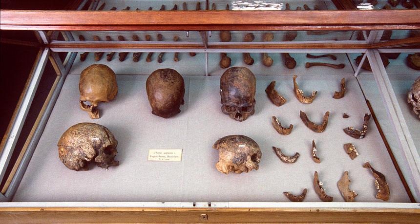 Crânes découverts dans la grotte de Lagoa Santa, au Brésil