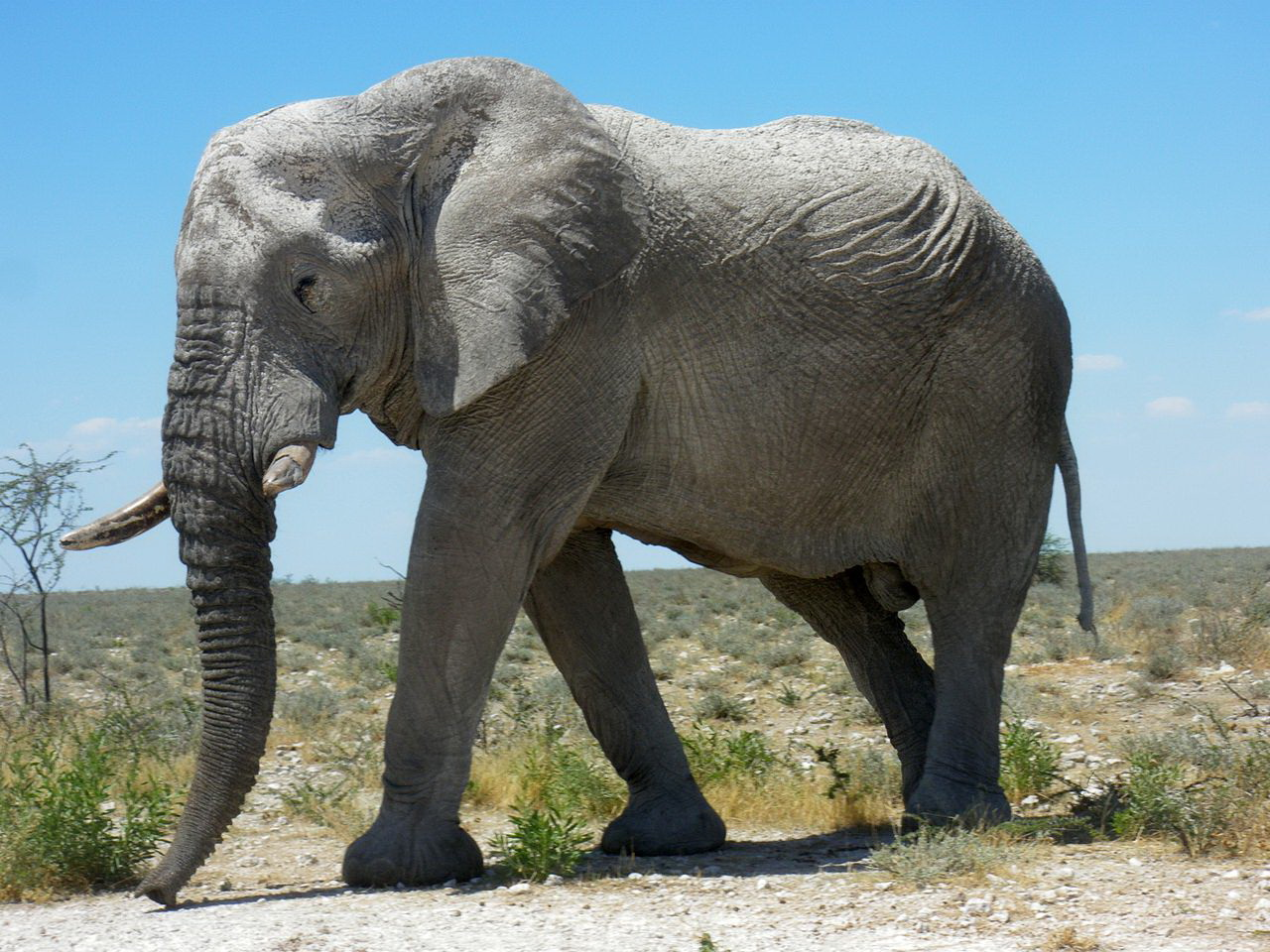 biotech info uncategorized elephant